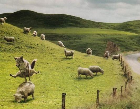 Soirée avec les éleveurs de la vallée