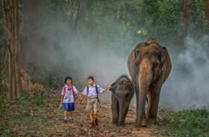elephant tiens main enfant