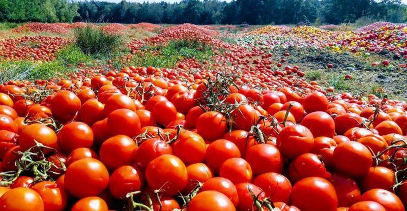 Atelier coulis de tomates et autres conserves!